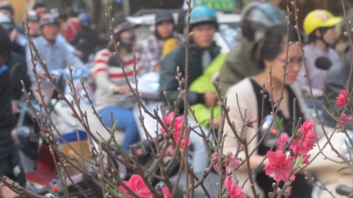 Peach blossom and busy roads go together before Tet in Hanoi