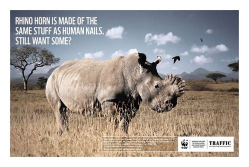 Traffic's new campaign to stop illegal trade in rhino horn.