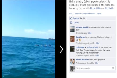 Dolphin pod at TOS