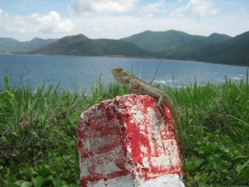 A lizard greets visitors to Con Dao. Photo by Mic Smith