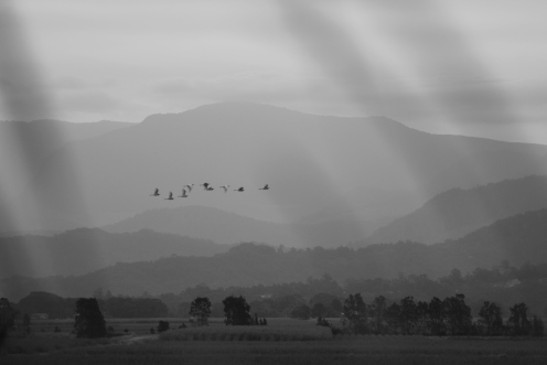 Storks fly past Mount Warning New Years sunset 1