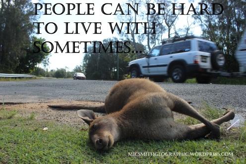 Habitat destruction kicks kangaroos out on the street