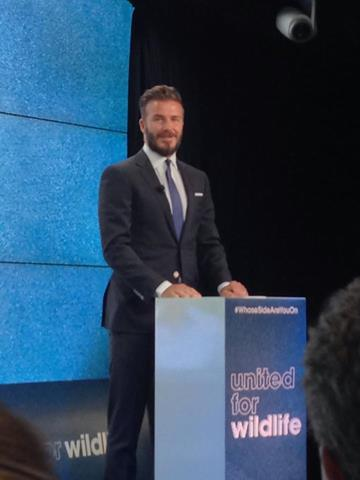 David Beckham launches the #WhoseSideAreYouOn campaign against the trade and consumption of endangered wild animal parts. Photo from United for Wildlife Facebook page.