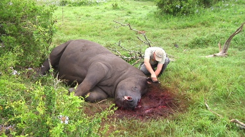 Vet Will Fowlds gives Thandi emergency first aid after the attack. He says the poachers must have hacked desperately at the rhinos heads to try and get the horns off quickly. When Themba died Dr Fowlds was so distraught he went down to the water and stroked rhino's back
